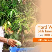 Hard Work Bore Fruit! Sikh families come together and turn a 300 acres fallow land into an orchard!